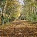 autumn-valley-trail
