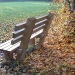 bench-and-autumn-leaves