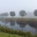 rsz_autumn_mist_and_centenary_willows