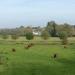 rsz_south_devon_cattle_on_kings_marsh
