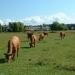 summer-grazing-1